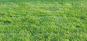picture of a healthy green lawn